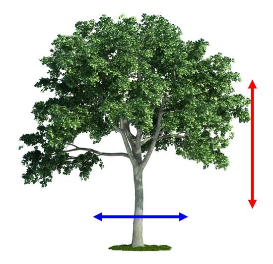 木の縦と横 - © Can Stock Photo Inc.