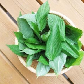 グリーンスムージー: 葉野菜の栄養とは