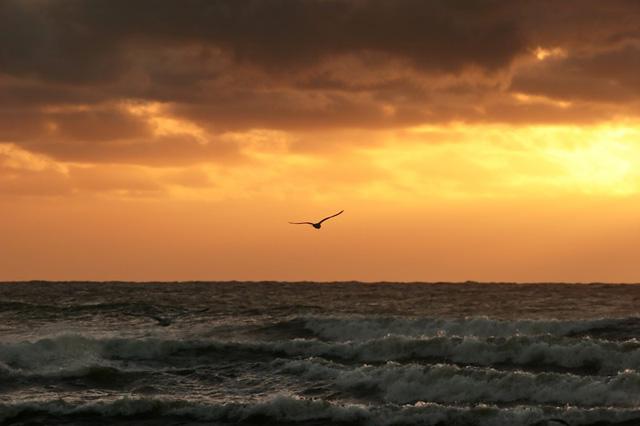 海と空とカモメ