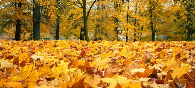 秋は最後の輝きの季節