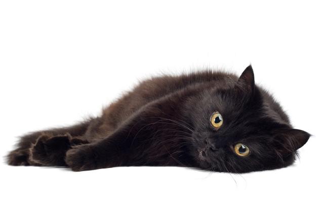 黒猫のルドルフはこんなイメージ
