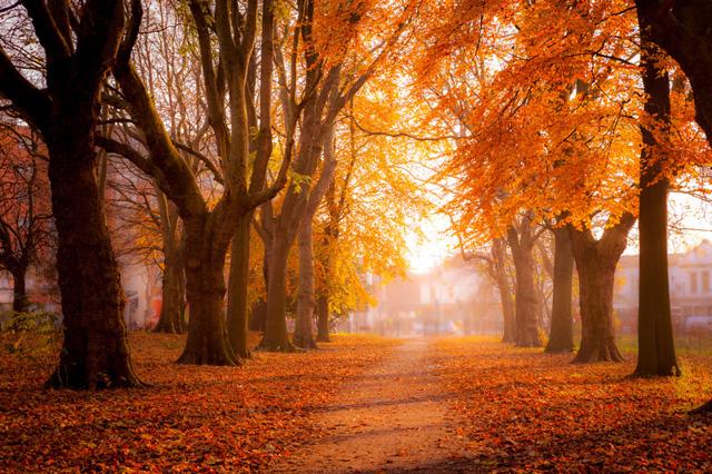 人生の秋を歩く