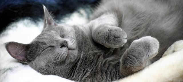 ぐっすりおやすみなさい