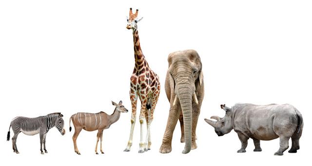 4本足の動物たち