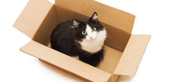 put in the box to tidy your life