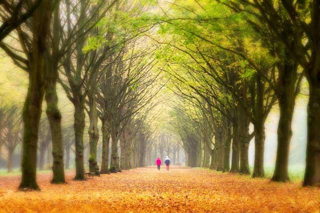 keep-walking on the way of life