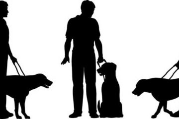 guide-dog-and-her-master