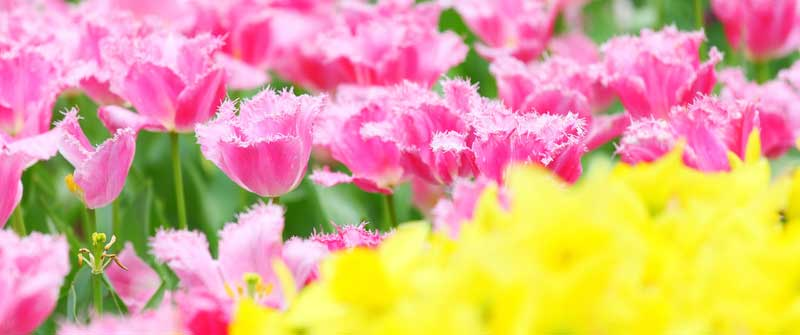 flower-shows-us-heaven