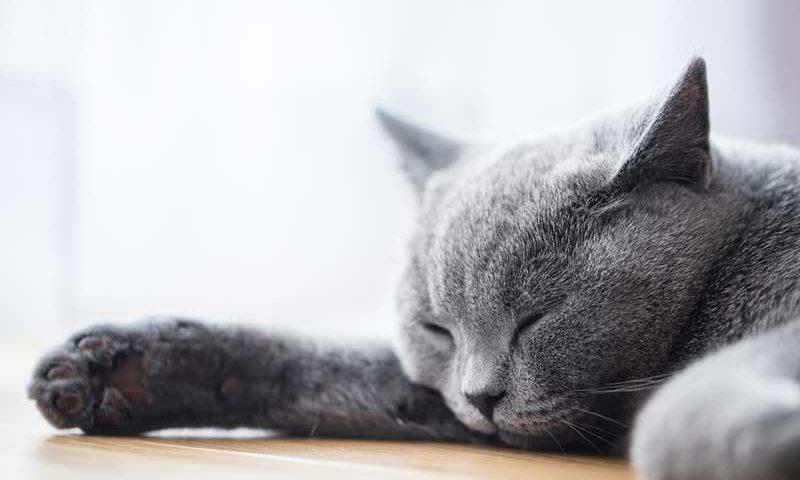 good-sleep-with-cool-pad